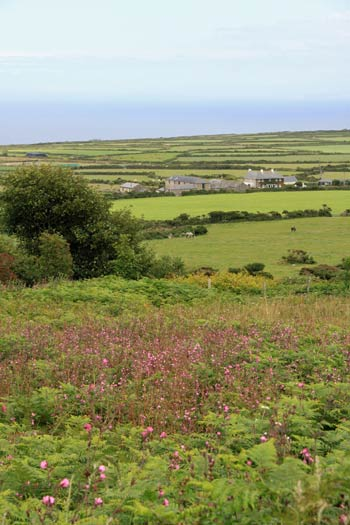 Into Cornwall, Nature and environment in Cornwall, gardens